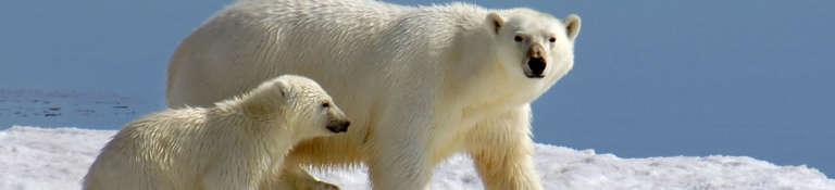 Arctic North Atlantic